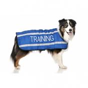 43669_friendly_dog_collars_hundedekken_training_1