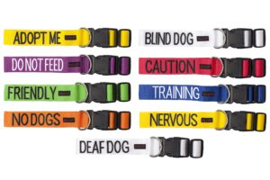 x1600_friendly_dog_buckle_collar_all-jpg-pagespeed-ic-uazlr_94dt